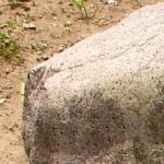 雷電の鋤石